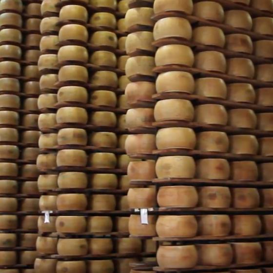 La stagionatura del Parmigiano Reggiano e del Grana PadanoBONI SpA